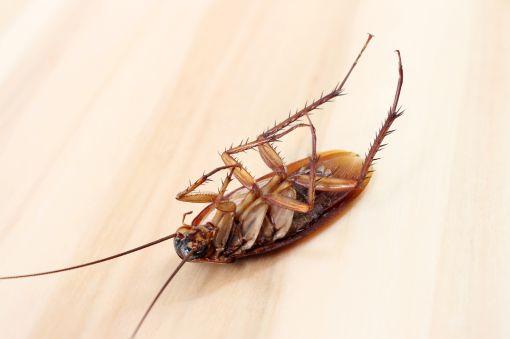 Dedetização em Pechincha RJ deixe bem longe insetos e animais perigosos!