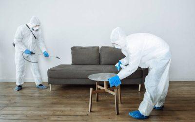 Dedetizadora em Paracambi: você sabe quais são os perigos de uma infestação de pragas em supermercados?